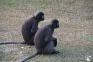 Monos al amanecer